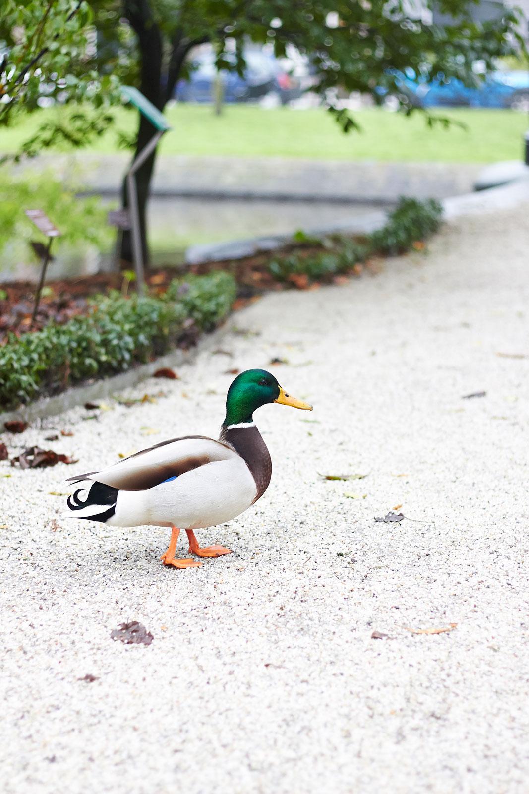 duck de hortus amsterdam green house botanischer garten