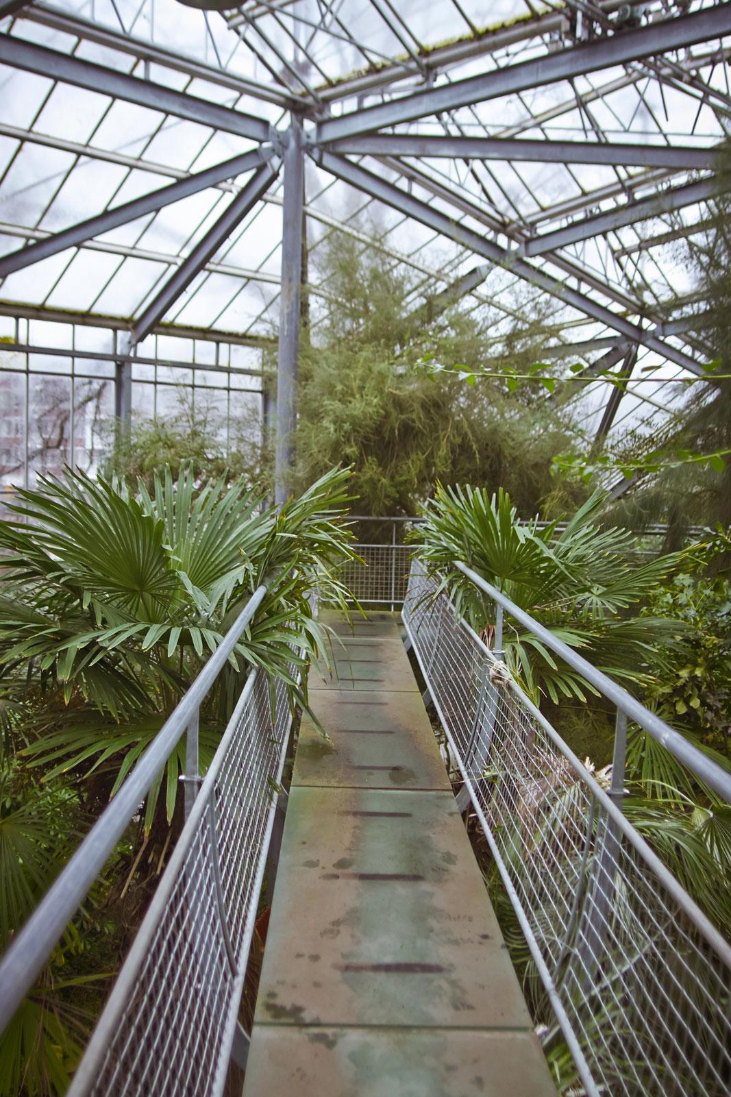 butterfly de hortus amsterdam green house botanischer garten